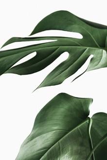 绿色大片植物叶子精美图片