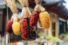 杂色玉米棒精美图片