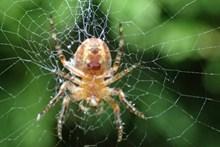 知网的大蜘蛛图片大全
