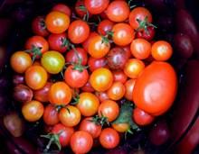番茄营养水果图片