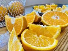 美味橘橙高清图