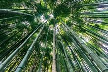 绿色竹子林景观高清图