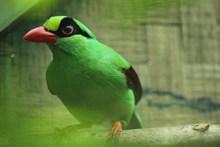 绿色飞鸟图片