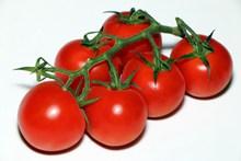 红色西红柿水果图片大全