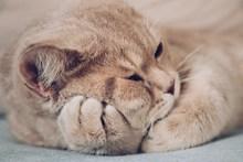 可爱猫咪壁纸高清图片
