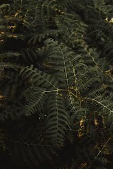 绿色的蕨类植物高清图片