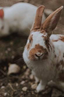 呆萌兔子图片下载