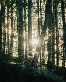 阳光穿过树林的精美图片
