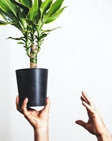绿化小盆栽高清图片