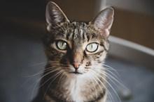 萌猫咪头像图片素材