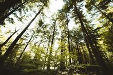 绿色树林树木高清图片