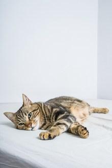 可爱呆萌小猫高清图