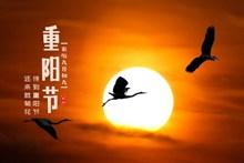 九九重阳节海报高清图片