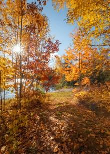 关于秋天的精美图片