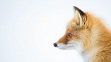 珍贵野生动物高清图片
