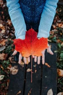 秋天枫叶意境高清图