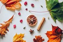 秋叶干柠檬片图片素材