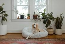 可爱狗狗写真图片素材