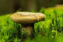 森林海绵蘑菇高清图片