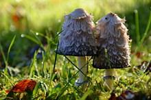 海绵蘑菇图片大全