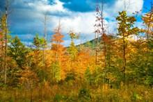 秋天黄树叶风景高清图片