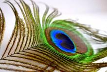 蓝色孔雀羽毛尾毛高清图片