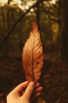 手拿黄色叶子图片