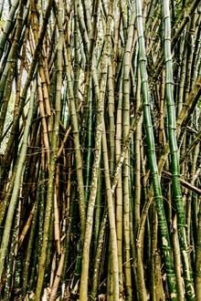 森林绿色竹子图片下载