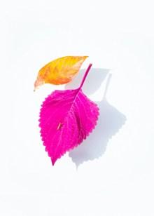 彩色树叶图片素材