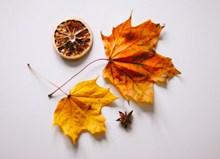 枯黄枫叶和干柠檬片高清图片