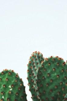 绿色仙人掌高清图