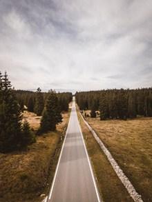 树林笔直公路图片下载