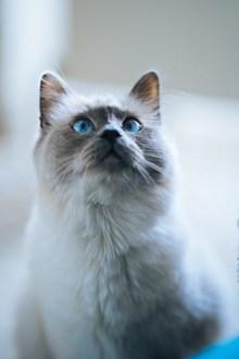 胖猫咪高清图片