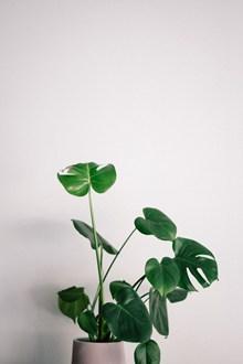 绿色清新小盆栽图片下载