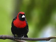 漂亮山雀鸟精美图片