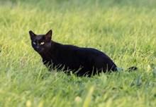 绿草地黑色小猫高清图