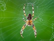 大蜘蛛近景特写图片素材