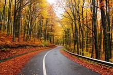 秋季森林景观图片
