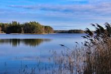 芦苇湖面风景图片