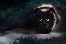 纯黑色小猫摄影图片大全
