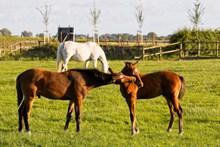 围场棕色马匹高清图