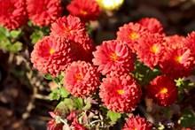灿烂红色花朵高清图片