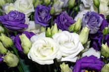 桔梗花花束特写高清图片
