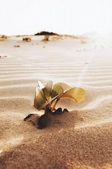 热带沙漠植物高清图