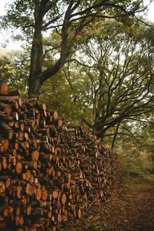 一堆被砍伐的木头整齐堆叠高清图