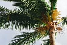 茂盛的棕榈树图片素材