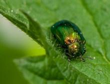 绿色甲虫图片下载