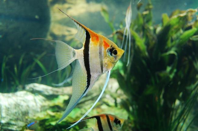 水族馆观赏金鱼高清图片