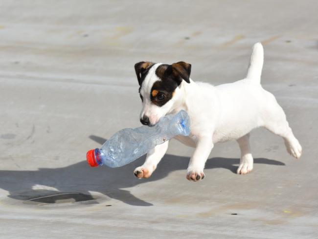 可爱白色小狗图片