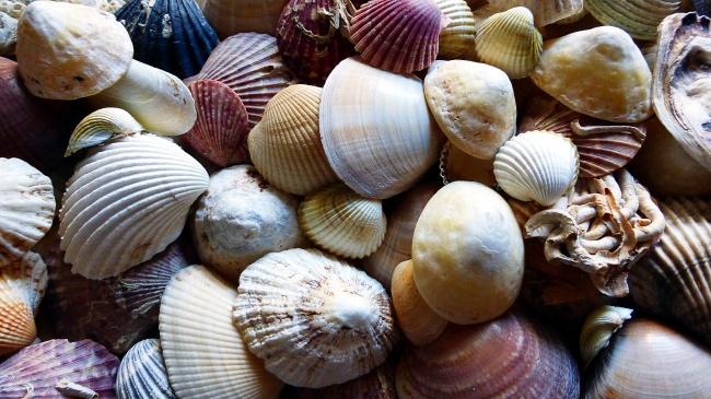 漂亮贝壳背景图片大全